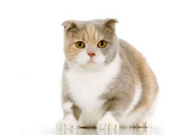 simturile pisicii