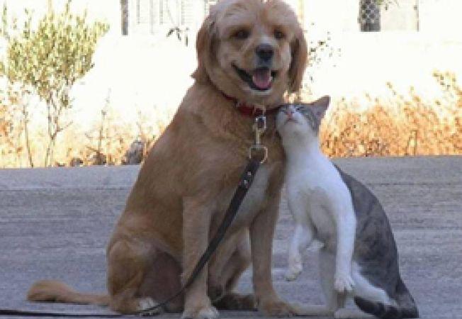 prietenia dintre caini si pisici