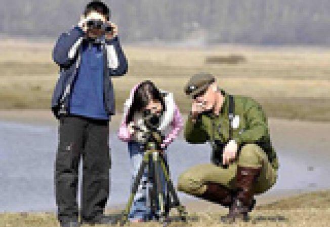 birdwatching insule