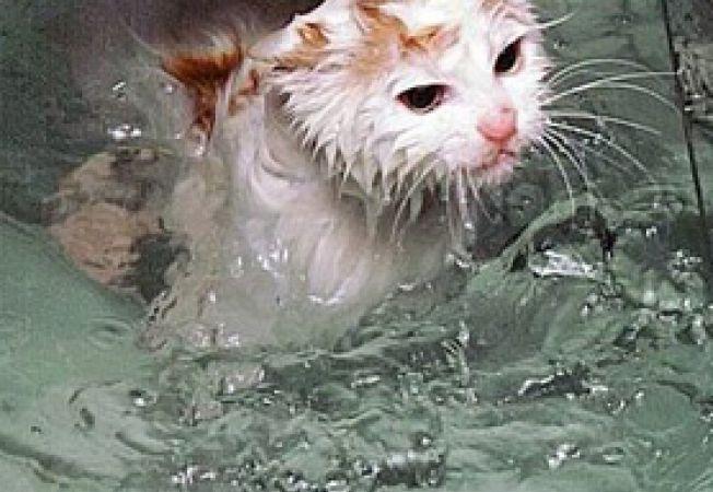 Pisica uda