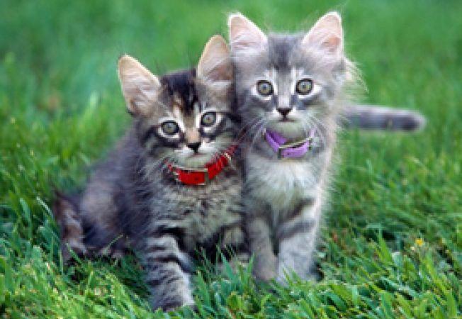 varsta pisicii