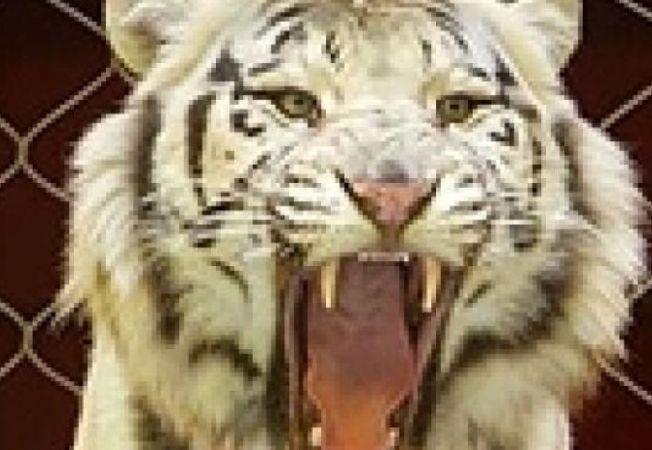 tigru alb