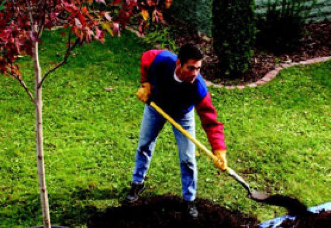 plantare pom