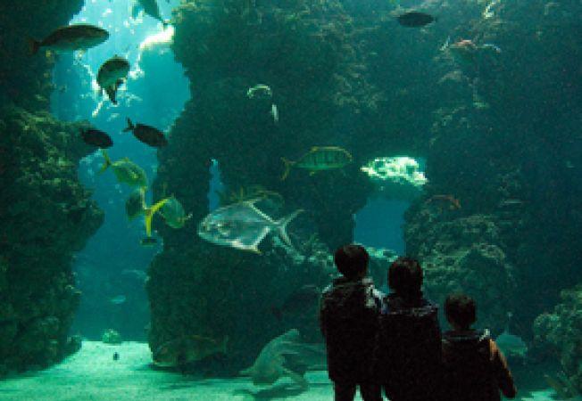 Muzeul Oceanografic Monaco