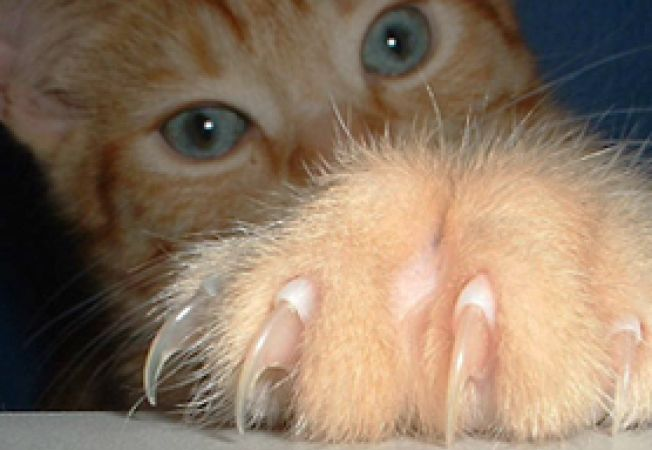 unghiile pisicii