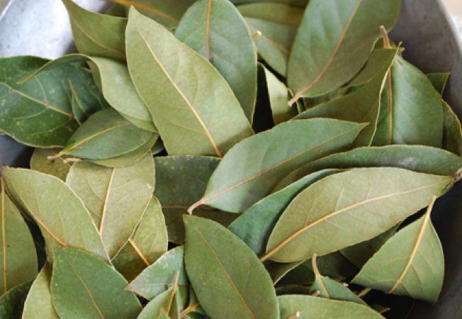 Frunzele de dafin sunt toxice