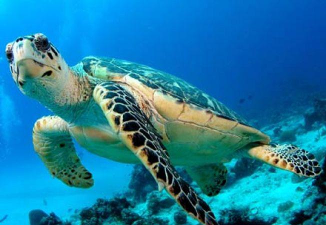 Imagini pentru Ziua Mondială a Broaștelor Țestoase