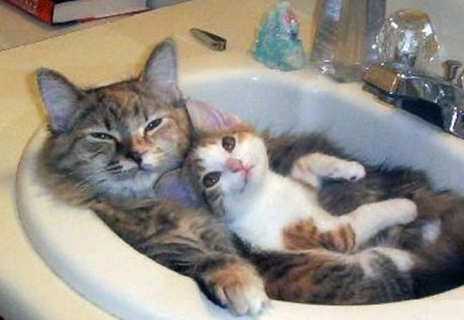 Image result for interesant despre pisici