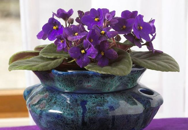 Plante Decorative Prin Flori Sau Plante Decorative Prin