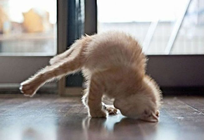 animale yoga 1