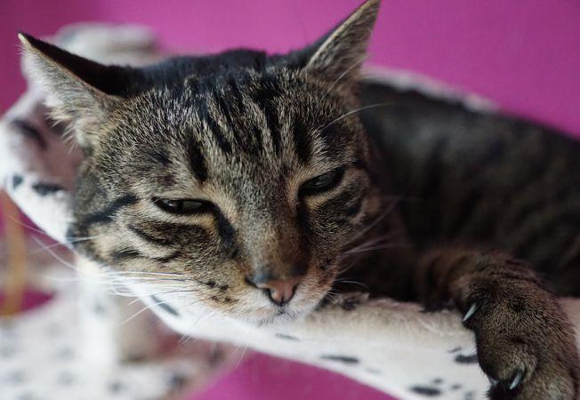 6 Cauze ale pierderii bruste in greutate la caini si pisici - Blog MobileVet