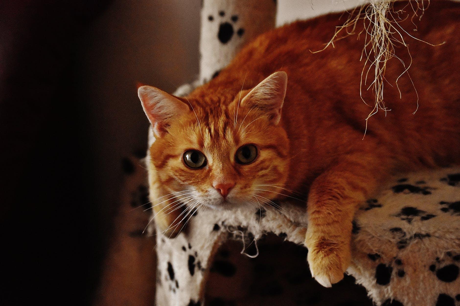 Obezitatea la pisici - mymamaluvs.com